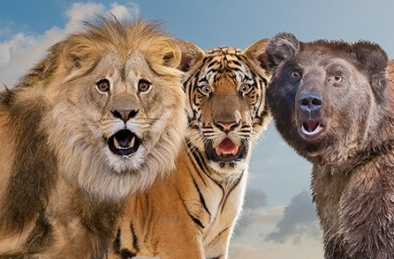 Lions, Tigers And Bears Oh My
