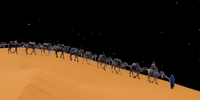 Leader Camels trans move